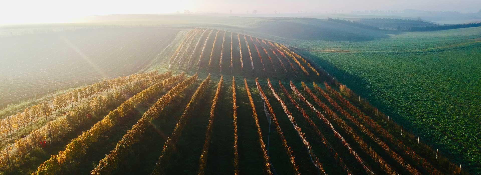 Winnice Dolnośląskie