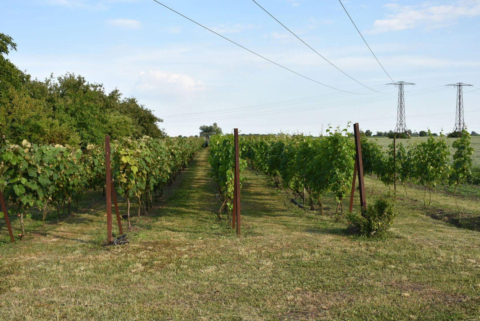 winnica-katarzyna-1