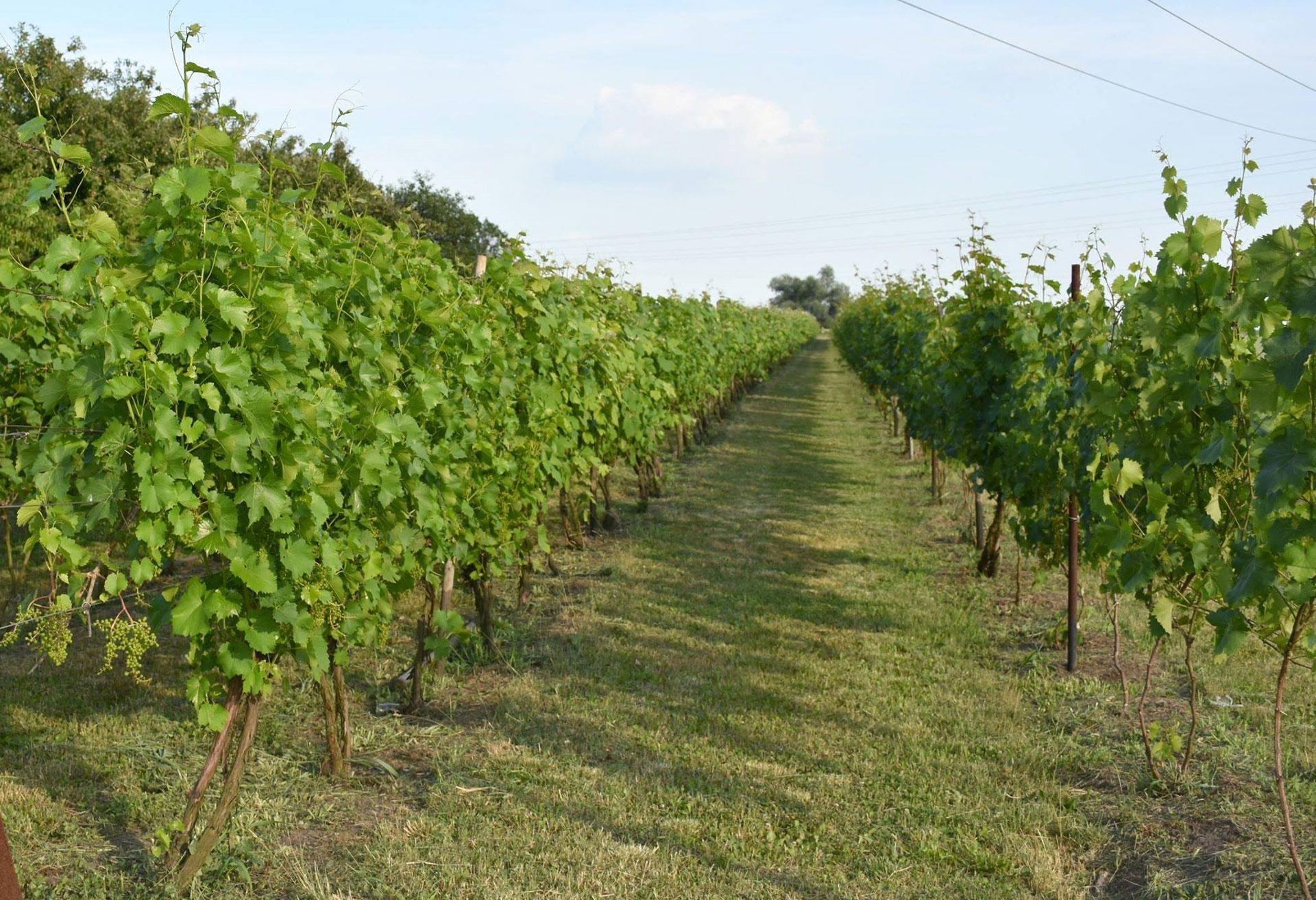 winnica-katarzyna-2